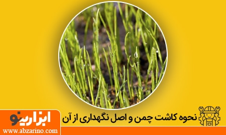 مهمترین نکات آموزشی نحوه کاشت چمن در حیاط خانه